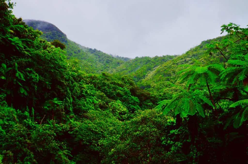 Forêt tropicale El Yunque